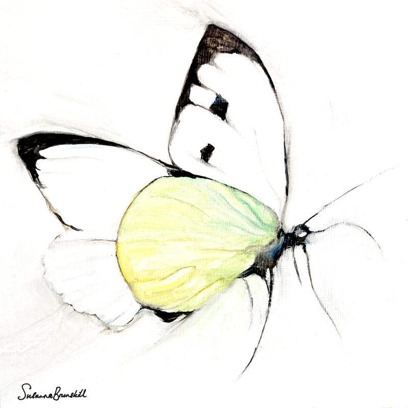 Large White Butterfly, oil on wood 20x20x2cms in white wood tray frame £110