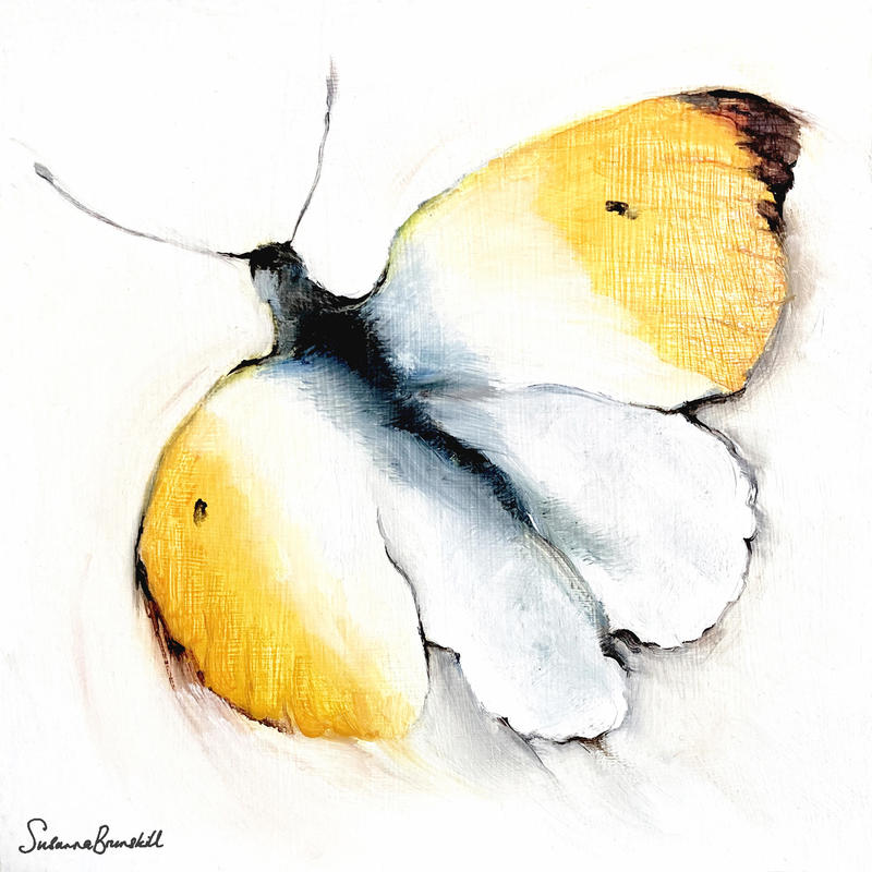 Orange-tip Butterfly.  Oil on wood 20x20x2cms in white wood tray frame £110