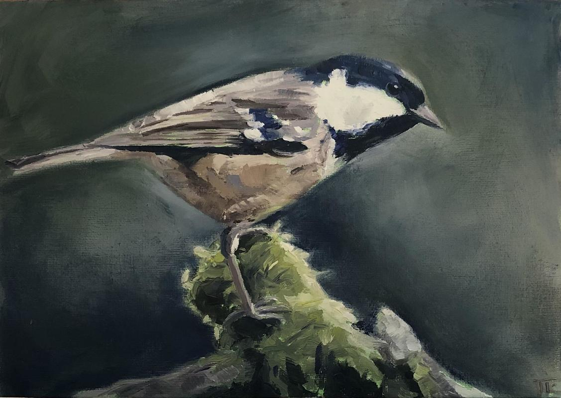 'Commanding coal tit', oil on canvas board A4  - a coal tit on a mossy branch