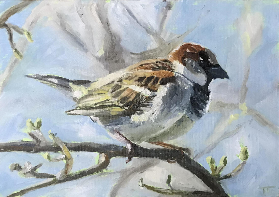 'Sky blue sparrow', oil on canvas board A4  - a sparrow in a tree in early spring