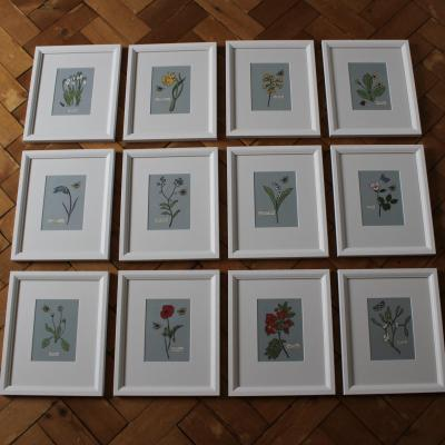 A Year of British Wildflowers and Plants - Print and paper collage -Framed Originals - 27 cm x 33 cm -Sold individually - £50