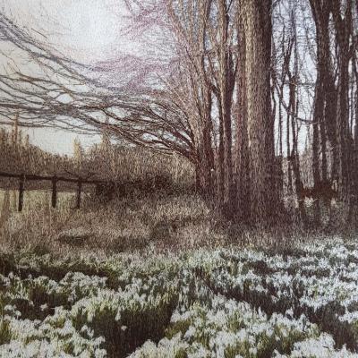 Snowdrops 2