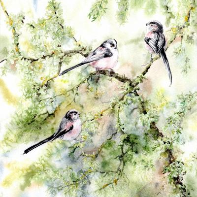 Long Tails and Lichen 1.  Watercolour 38 x 40 cms framed  £245.00