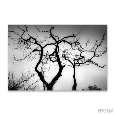 Ridgeway Silhouettes 3