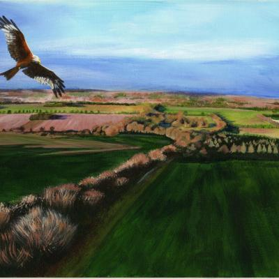 Red Kite over the Ridgeway. Acrylic. £180 A3 sized, mounted and framed.