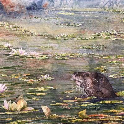 Otter in the Water Lilies.  Watercolour on paper