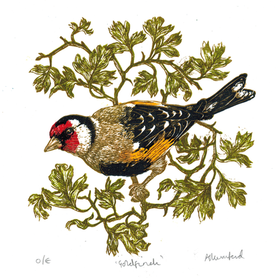 Goldfinch, hawthorn