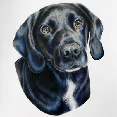 Charlie - A3 colour pencil portrait