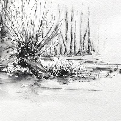 Crack willows on the flooded Cherwell