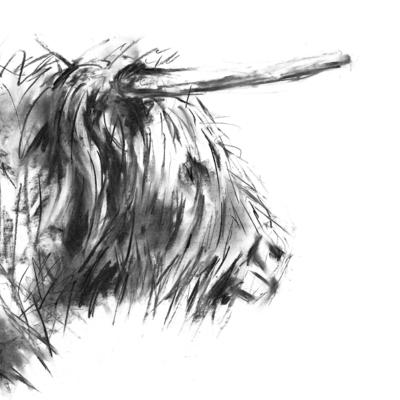 Highland Cow Charcoal