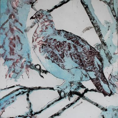Turtle Dove - etching & aquatint