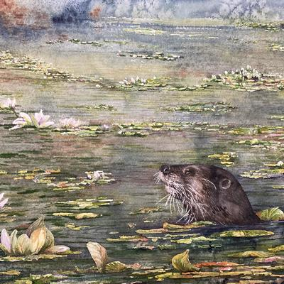Otter and Lilies. Watercolour. 51 x 41 cms. Framed. £325