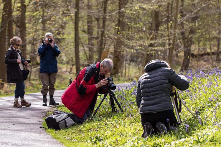Photographers and bluebells